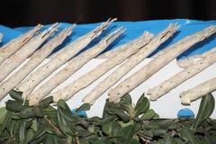 Judisk höstferie Royaltyfri Foto