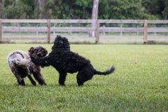 Juego áspero del perro en archivado fotos de archivo