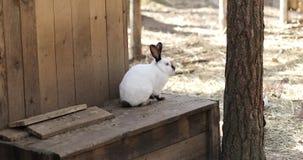 Juego blanco y negro de los conejos en el territorio de la granja almacen de video