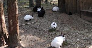 Juego blanco y negro de muchos conejos en la granja almacen de metraje de vídeo