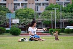Juego chino asiático del estudiante universitario con el perro en el patio Fotos de archivo