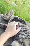 Juego con un gato de gato atigrado Foto de archivo libre de regalías