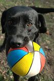 ¡Juego conmigo! Foto de archivo libre de regalías