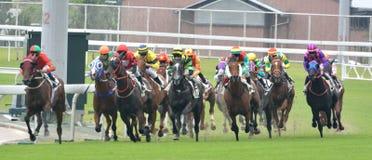 Juego de la carrera de caballos Imagenes de archivo