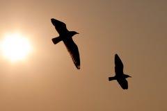 Juego de la gaviota con el sol Foto de archivo libre de regalías