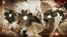 Juego de la luz de la flor del jardín de la primavera Foto de archivo