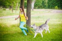 Juego de la muchacha con el perro fornido Imagen de archivo libre de regalías