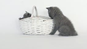 Juego de los gatitos en cesta almacen de metraje de vídeo