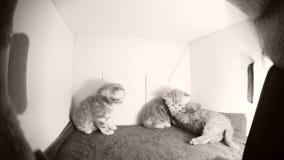 Juego de los gatitos en una caja metrajes