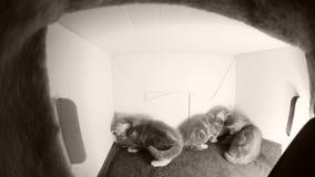 Juego de los gatitos en una caja almacen de metraje de vídeo