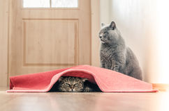 Juego de los gatos Fotos de archivo
