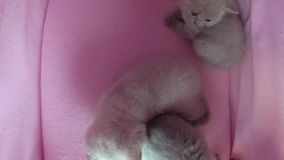 Juego de los gatos en una tienda del animal doméstico metrajes