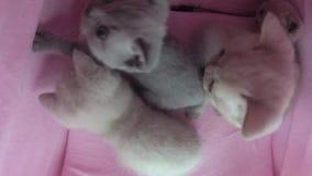 Juego de los gatos en una tienda del animal doméstico almacen de metraje de vídeo