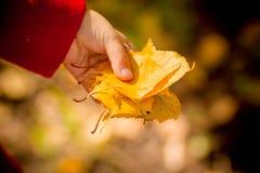 Juego de los niños en parque del otoño Follaje de caída Humor del otoño Niño del niño o niño del preescolar en caída Hojas de oto imagenes de archivo