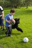 Juego de niños con el perro Foto de archivo libre de regalías