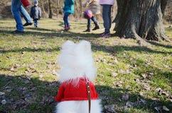 Juego de niños con una bola en el parque un muchacho y todavía del perro un retrete Fotos de archivo libres de regalías