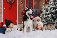 Juego de niños hermoso con el perro del perro esquimal de la raza en interior del Año Nuevo con el árbol de navidad Imágenes de archivo libres de regalías