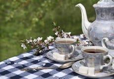 Juego de té con las flores del cerezo Imagen de archivo
