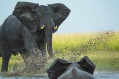 Juego del elefante que carga el otro elefante imagen de archivo