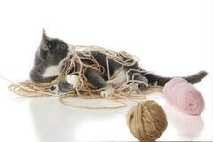 Juego del gatito Imagen de archivo