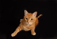 Juego 2 del gato Fotografía de archivo