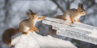 Juego del hielo Imágenes de archivo libres de regalías