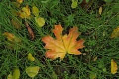 Juego del otoño de colores Fotos de archivo
