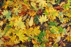 Juego del otoño de colores Foto de archivo