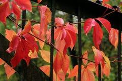 Juego del otoño de colores Foto de archivo libre de regalías