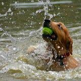 Juego del perro Fotografía de archivo