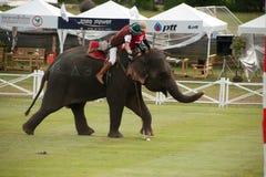 Juego del polo del elefante. Imagen de archivo libre de regalías