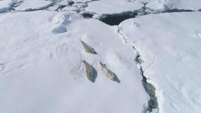 Juego del weddell del sello de crabeater de la Antártida en el iceberg almacen de metraje de vídeo