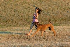 Juego divertido de los perros Fotografía de archivo libre de regalías