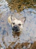 Juego dulce divertido del perro en el agua foto de archivo