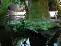 Juego en verde Imagenes de archivo
