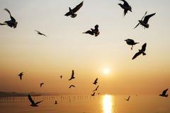 Juego hermoso de la gaviota de la salida del sol Imagen de archivo