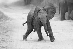 Juego joven del elefante en el camino mientras que alimentación de la familia cerca en artístico Foto de archivo libre de regalías