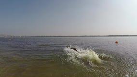 Juego marrón alegre de Labrador en agua metrajes