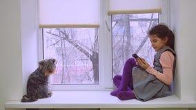 Juego online adolescente del web de la muchacha que juega para el smartphone y perro que se sienta en animal doméstico del alféiz Imagen de archivo libre de regalías