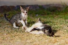 Juego sin hogar de los gatitos Imágenes de archivo libres de regalías