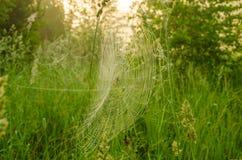 Juegos anchos del web en el viento Fotografía de archivo libre de regalías