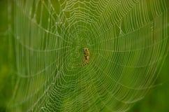 Juegos anchos del web en el viento Foto de archivo