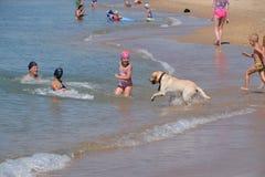 Juegos de niños con un perro en la playa Un perro es un amigo del hombre foto de archivo libre de regalías