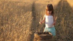 Juegos de niños del granjero con las espiguillas del trigo en el campo el bebé sostiene un oído poco hijo, la hija del granjero,  almacen de video