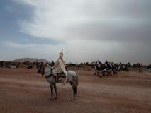 Juegos del caballo Imágenes de archivo libres de regalías