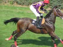 Juegos del Equestrian de Ljubicevo Foto de archivo libre de regalías