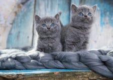 Juegos del gatito con el tarro del atasco imágenes de archivo libres de regalías