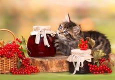 Juegos del gatito con el tarro del atasco fotos de archivo libres de regalías