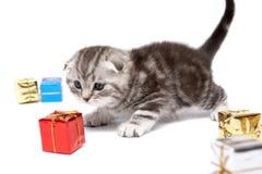 Juegos del gatito con los rectángulos de regalo Imagenes de archivo