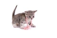 juegos del gatito en un fondo blanco Fotografía de archivo libre de regalías